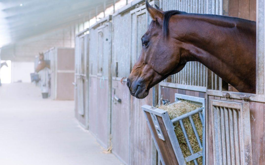 PRODUCT: Easy Hay Slowfeeder van Paco Horse Products