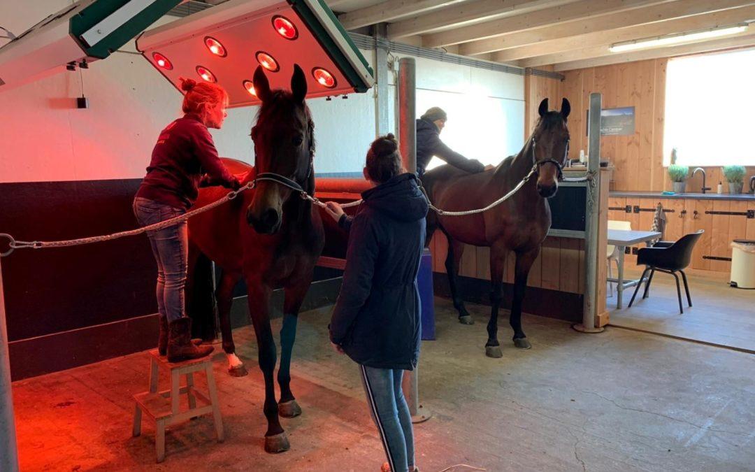 SPOTLIGHT: Hoe herken je pijn bij je paard?
